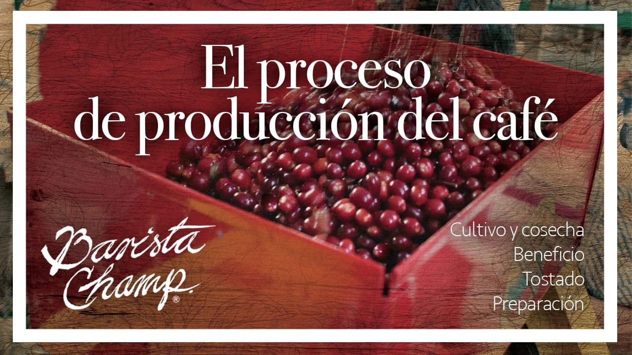 El Proceso de Producción del Café