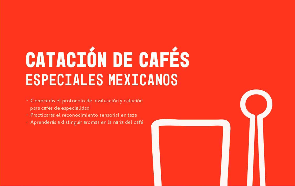 Taller de catación de cafés